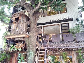 """広尾にあるボタニカルカフェ「Les Grands Arbres(レ・グラン・ザルブル)」。""""大きな木""""を意味する店名の通り、大きなシンボルツリーと小さなツリーハウスがお店のシンボルになっています。ナチュラルな雰囲気いっぱいで、大きな木に包まれているような気分で、ゆっくり過ごすことが出来ます。"""