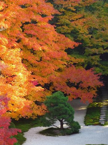 白砂と苔、ひし形の畳石の配置。遠州ならでは構成は、冴え冴えとした美しさ。緑と紅葉と相まって、一幅の絵画のような趣きです。 【南禅寺三門からの撮影した11月下旬の方丈前庭。】