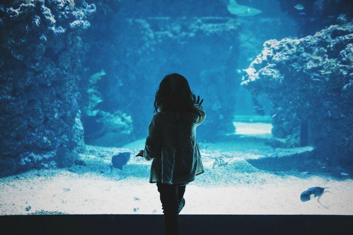 いつもと違う角度で楽しむ<全国のテーマ別水族館★5選>
