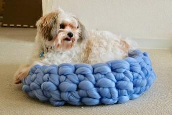こちらはペットの寝床として作られています。やわらかくてあたたかなチャンキーニットはペット用として使うのもおすすめです。とっても気持ちよさそうですね!