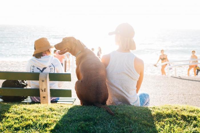 「見返りを求めないピュアな愛情」 犬は飼い主に絶対的な信頼を寄せてくれます。さみしい時そっと寄り添ってくれたり、お気に入りのおもちゃをプレゼントしてくれたり…。見返りを求めない純粋な愛情に気づかせてくれます。