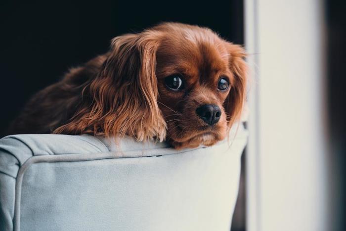 散歩やしつけなど、犬にはしっかりと時間を掛けて接してあげなくてはかわいそう。さらに、エサ代はもちろん、ワクチンを何度も打ったり、健康診断、さらには急なケガや病気の治療費など、実は意外とお金は掛かるもの。犬に掛けてあげられる時間とお金は十分にありますか?