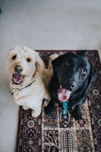 お友達の家のワンちゃんを見ていて、こんな子が欲しいなと思っても、犬にはそれぞれ性格があります。犬種によっても個体によっても、その個性はさまざま。イメージしていた犬と違うと思っても遅いのです。理解しておきましょう。