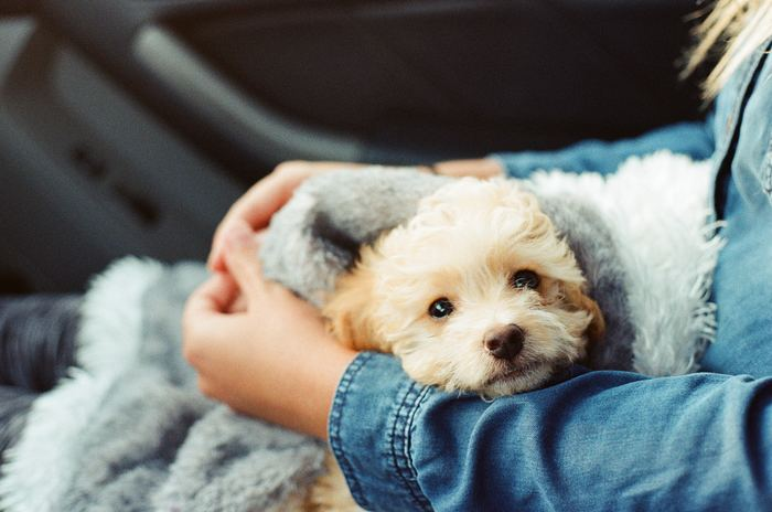 県や市、またはNPO団体などによって運営されている動物保護施設は、さまざまな理由から保護が必要となったペットたちが集まって来ています。飼い主に捨てられたことから人間に不信感を持っている犬などもおり、初めてだとなかなか育てにくい子も。譲渡には審査があるため、誰でも譲り受けられるわけではありません。