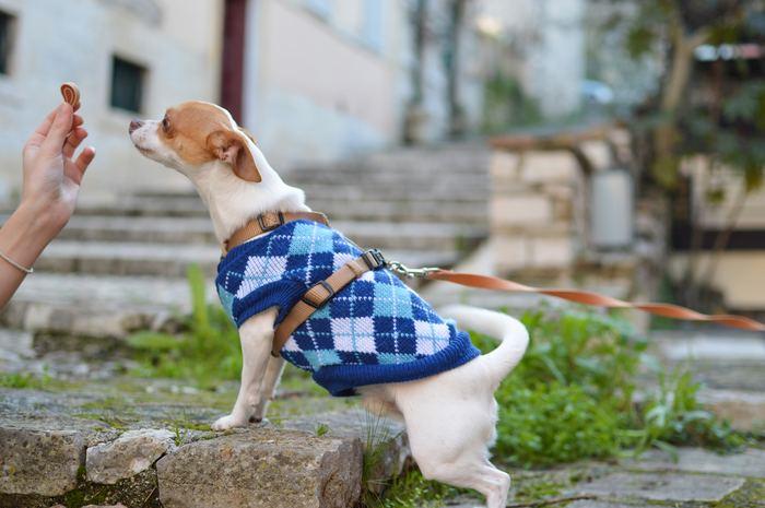 しつけは犬のためにも必ず行わなくてはいけないこと。人間社会で暮らして行くために、そして飼い主との信頼関係を築く上でも大切なことです。子犬のうちはおトイレ訓練や外の環境に慣らす訓練を。3ヶ月を過ぎた頃からは、「お手」や「伏せ」などの基本的なしつけを行っていきましょう。