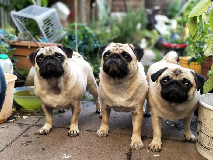 「臭い、抜け毛…」 犬種によって差はありますが、犬には抜け毛がつきもの。どうしてもお部屋は汚れてしまいます。また、動物なので臭いがするのは当然。お世話やお部屋の掃除をこまめにしてあげなくてはいけないのです。