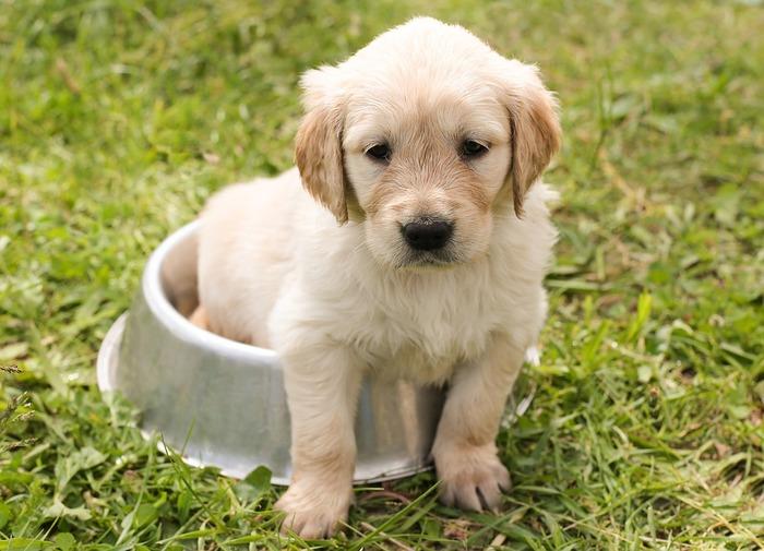 犬がお家にやってくるなら、やはりそろえておかなくてはいけないものがたくさん!エサを食べる食器や犬用のトイレなど、初日から使うものもあるので、事前にしっかりと準備しておくことをおすすめします。