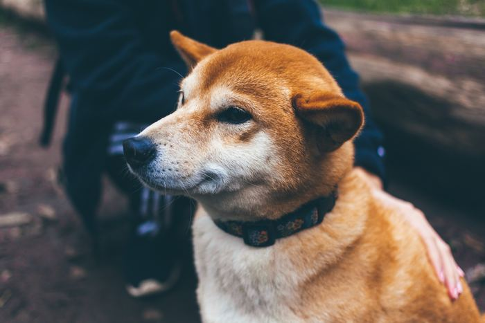 元の飼い主さんがさまざまな事情で飼えなくなってしまった犬を引き取る、里親制度。飼い主さんから直接譲り受けるケースと、保健所から引き取るケースがあります。生体代は掛かりませんが、犬によってはワクチンや治療が必要な場合も。
