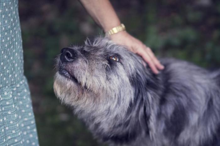 犬を飼う前に知っておきたい心構え。そして、犬を迎えるために必要なことをご紹介しました。しっかりと心構えを持って迎え入れた犬は、きっとあなたの大切な家族、そしてかけがえのない存在になってくれるはずです。