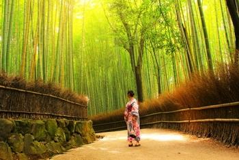 「大和撫子」とは日本人女性の清楚な美しさをナデシコの花に見立てた言葉です。時代は変われど、変わることのない日本の美意識をたどりながら、「大和撫子」という理想の女性像を見つめ直してみましょう。