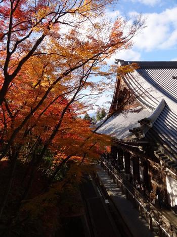 見所も寺宝も多い「永観堂」の素晴らしさは、境内の景観と雰囲気。  豊かな自然環境の中に、寂びた建築物や庭が心地良く調和した境内は、春夏秋冬それぞれに趣きがあり、訪れれば、素晴らしい景色を楽しみながら、心豊かな一時が過ごせます。