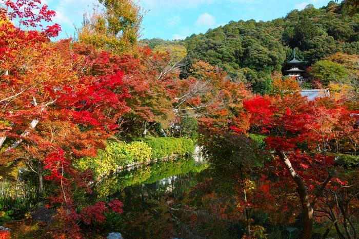 境内の最奥、一番の高台に建つ「多宝塔」からは、京都市街が一望出来ます。【11月中旬の「放生池」と「多宝塔」】