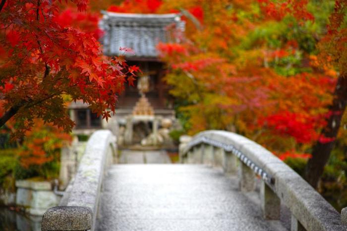参道から池、多宝塔にかけて、3000本以上の楓(カエデ)が植わり、紅葉時になると境内を紅く染め上げ、見事な景色が広がります。【11月中旬の境内中央の「弁天社」(画像奥)。手前は、境内中央の「放生池」に架かる「錦雲橋」。】