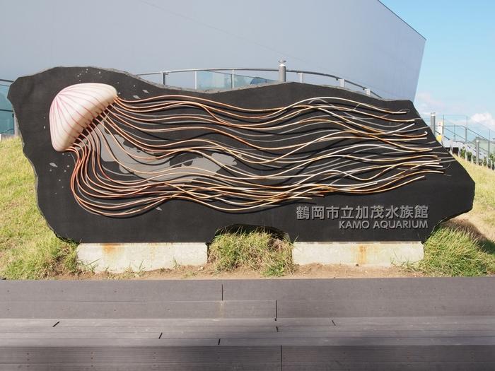鶴岡市立加茂水族館は、クラゲを中心に展示しています。通称「クラゲドリーム館」。クラゲの展示数は50種類以上にのぼり、その数は世界一といわれているそう。