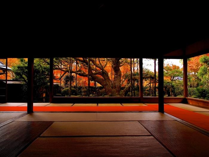 ここからは、京都指定の天然記念物でもある樹齢700年の五葉松を眺めることもできます。