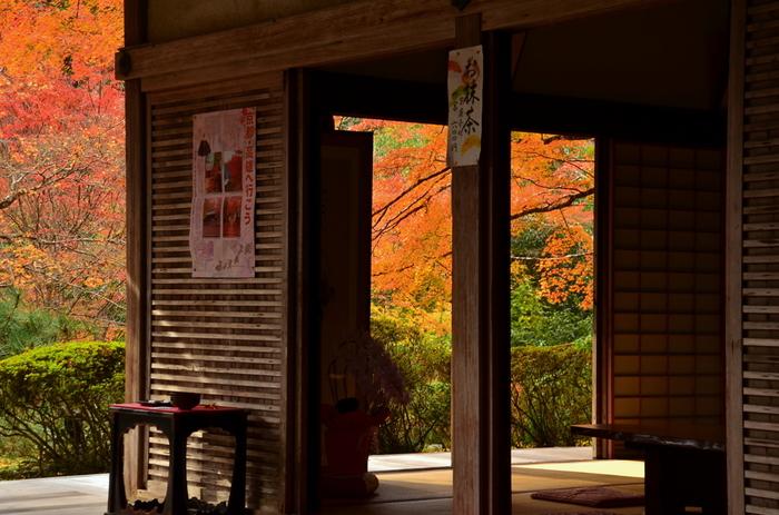 """今年はそんな特別な景色を、京都の寺院にある""""風情あるお茶席""""で楽しんでみませんか?"""