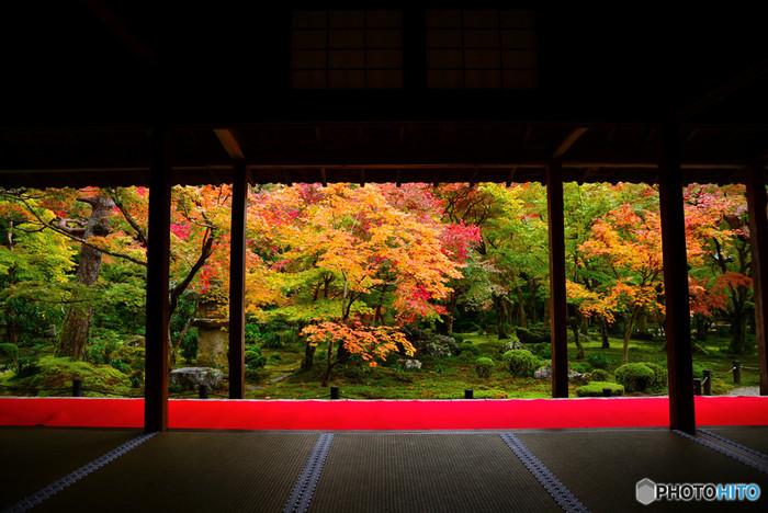 寺院の庭園も、この季節にしか見せない表情で私たちを迎えてくれます。お庭を歩きながら楽しむ紅葉はもちろんですが、建物内から眺める紅葉は柱などがフレームの役割をしてくれて、まるで芸術作品を見ているかのよう。