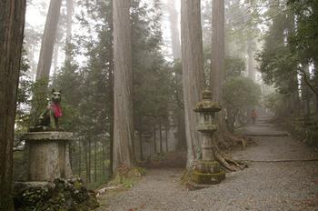 山深いエリアにある三峯神社は、山の霊気が凝縮していることから関東最大のパワースポットとしても有名。自然の気を体にチャージするお詣りに訪れてみませんか?