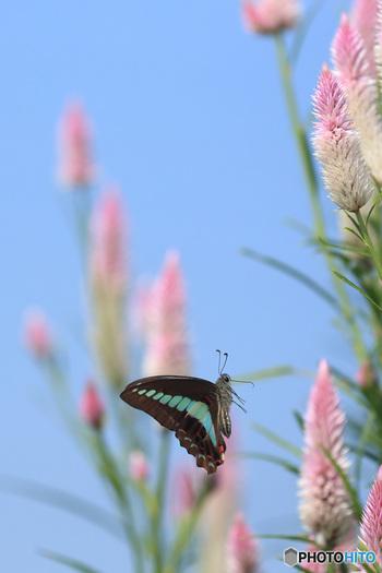 身近な自然をよく観察してみましょう。足元でアリが列をつくっていたり、聞きなれない鳥の鳴き声に気づくかも。周囲をよく見渡せるようになったら、悲しみを手放せるのはきっともうすぐ。