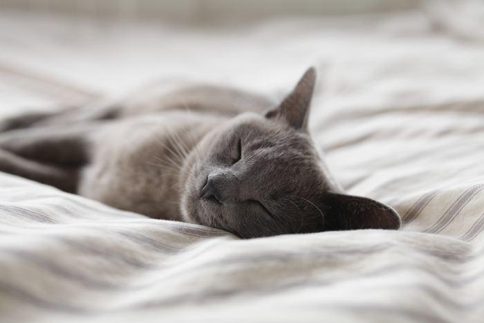 寝る前の時間は、より良い眠りを導いてくれるのにも大切なひととき。だらだらしてしまいがちだけれど、ゆったりとした気持ちで「自分を大切にする」時間に出来ると素敵ですね♪夜の時間を今よりちょっぴり大切に過ごしてみませんか?