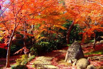 とても広く、手入れが行き届いた庭園は紅葉も見事。紅葉の見頃には毎年恒例の茶会も開催されています。