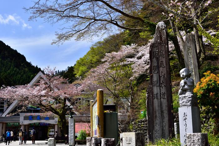 いつ行っても、それぞれの季節を楽しめる高尾山。春は桜やスミレなど可憐な花々が楽しめます。暖かくなり、山歩きも気持ち良い季節です。