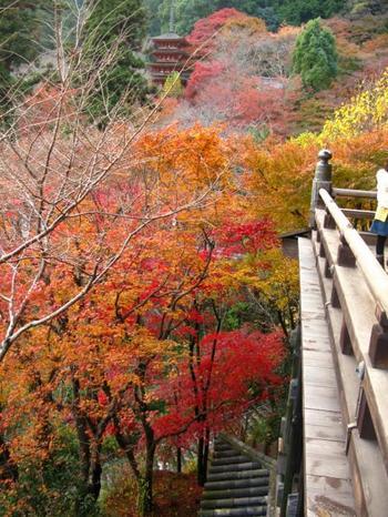 お寺の門をくぐると、およそ200メートル、399段の石段登廊があります。頑張ってのぼりきった先の本堂の舞台から周囲を見渡せば、視界はまさに錦絵といった風情です。