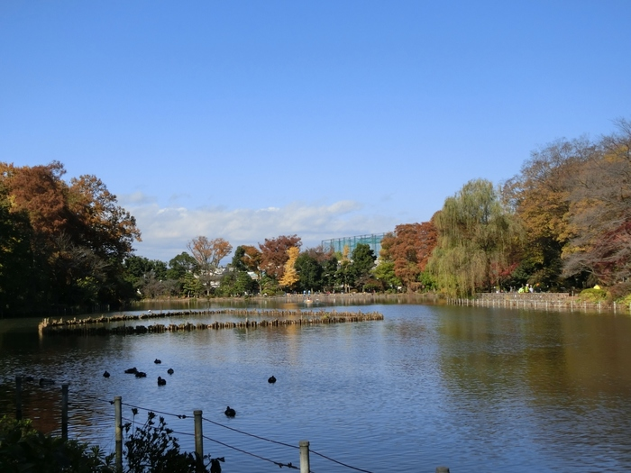 善福寺公園は2つの池を中心とした公園で、西荻窪の駅からは徒歩で20分ほどです。地元の人に愛される、自然豊かな公園は比較的静かなので1日をのんびりと過ごすにはおすすめの場所です。周辺を散歩したり、水鳥を眺めるのも良いですよ。