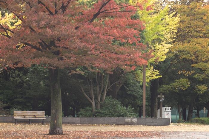 木場公園は紅葉の季節はトウカエデなどが赤く色づき、美しい景色に。広場のベンチに座って眺めてみてはいかがでしょうか。