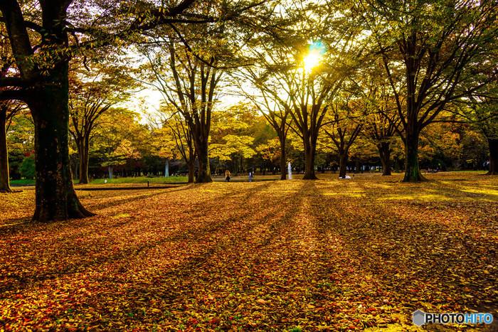 都心のオアシスである代々木公園。原宿や渋谷からも徒歩で行ける代々木公園は、敷地内に明治神宮もあり、世界中から様々な人が集まるとっても広い公園でもあります。イベントやフェスもよく行われ、にぎやかな声が響きます。秋はケヤキ並木の紅葉も綺麗です。