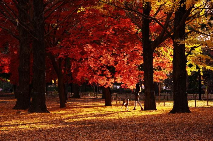 日中は過ごしやすい季節になって、木々の色もだんだんと美しくなる秋は外に出るのも楽しくなりますね。天気の良い休日は公園までのんびりと散歩を楽しむのはいかがでしょう?