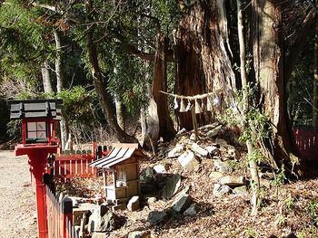 登山道は愛宕神社の表参道を兼ねていて、文化的な香りも楽しめる愛宕山。パワースポットとしても有名です。下山道はさらに自然がいっぱいで野生動物に出会えるかもしれません。上りと下りで違った表情が楽しめるところも大きな魅力です。