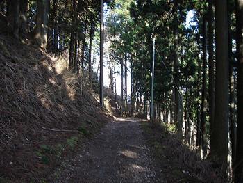初心者向けのトレッキングツアーなども開催されている愛宕山。こんな木々の小径で深呼吸したいですね。四季折々の美しい自然を満喫しにいきませんか。