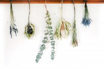 ドライフラワーの作り方として最も簡単で有名な方法が「ハンギング法」です。 ハンギング法とは風通しのいい場所に吊るしておくだけ。ポイントは花が満開になる前に吊るすことと、花同士が重ならないように、花束なら小分けにして吊るすこと。そうすることでよりキレイなドライフラワーになりますよ。