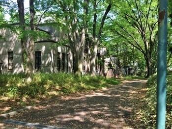 京王井の頭線・駒場東大前駅から歩いて数分。大学構内の木立を抜けて到着します。