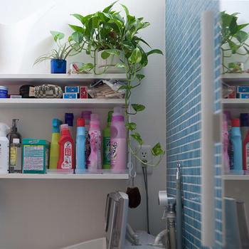 洗剤などを置く棚も、壁に付けるタイプが便利です。白を選ぶと、清潔感のあるランドリーに見えますね。グリーンを飾ると爽やかさもプラスされます。