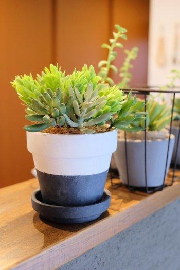 こちらも、フェイクグリーン・植木鉢ともに100均のもの。根元にはココナッツファイバーが一緒に入れられています。 ツートンカラーがおしゃれな植木鉢は、テラコッタの植木鉢をアクリル絵の具でリメイクしたものです。