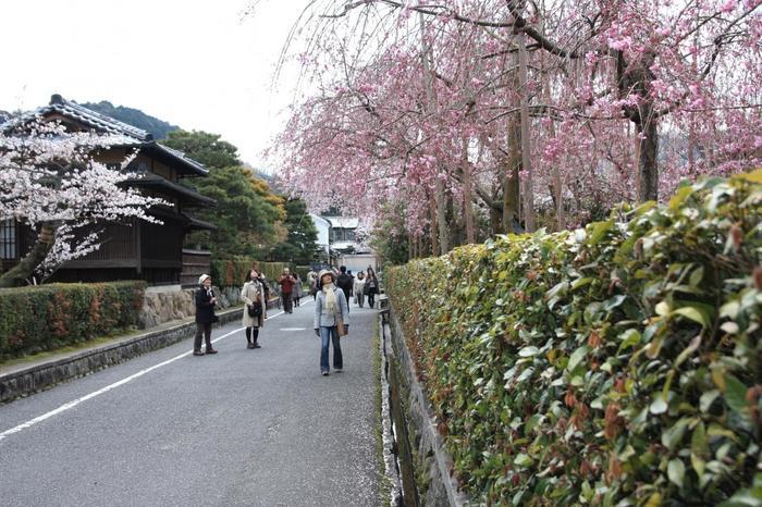【桜の頃の南禅寺界隈】