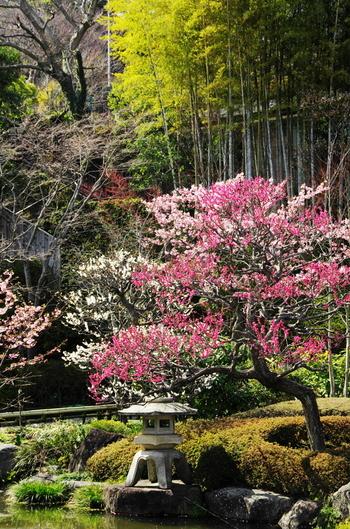 いつ訪れてもその季節の花を堪能できる長谷寺。これは、ご住職が極楽浄土のような花で溢れたイメージを境内に作りたいと、丁寧に庭作りを始めたからだそうです。