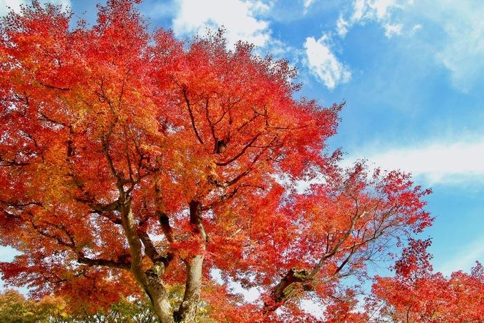 新宿から箱根湯本まではロマンスカーで 90 分と、東京からのアクセスも抜群の温泉地「箱根」。 週末や急に休みが取れてどこかに行きたい時に、気軽に出掛けてリフレッシュするには最適です。温泉はもちろん美術館や自然も堪能できる箱根は、これから秋から冬にかけての時季は特におすすめ。 今回は、箱根のお宿情報から紅葉スポット、美術館紹介、ご当地お土産にいたるまで、箱根の全てをご案内します♪