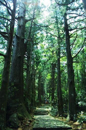 言わずと知れた世界遺産の熊野古道(くまのこどう)は、熊野三山と呼ばれる神社(熊野本宮大社、熊野速玉大社、熊野那智大社)へと通じる参詣道の総称で、熊野参詣道ともよばれています。