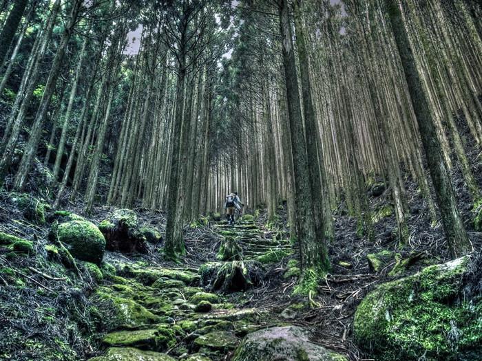 神様に向かって山を通らせていただいているような、神聖な空気が流れているのを感じることができる場所です。石畳で整備された比較的歩きやすい道もあれば、足元も苔むした原生林のような道も。