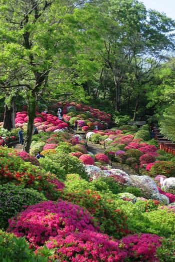 また、春には「文京つつじまつり」が開かれます。約3000株のつつじが咲き誇る景色は必見です。
