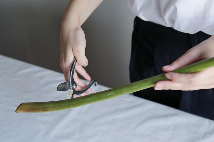 蕾を咲きやすくするために、毎日しっかりと切り戻すことが大切です。茎が太くてしっかりとしているので、ハサミで斜めに切るのが難しい場合は、フラワーナイフやカッターを使います。くれぐれも、刃物の扱いには注意して行いましょう。