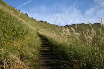 ススキを眺めながら高原をぐるりと一周するハイキングコースは、なかなか歩きごたえがあります!高原は涼しいですが歩き始めるときっと汗をかくので、温度調節がしやすい服装でお出かけ下さい。