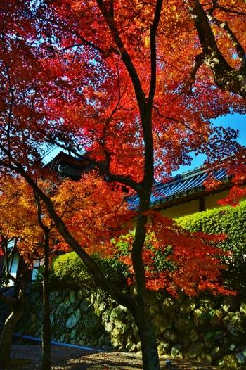 散策をしながらの紅葉狩りももちろん素敵ですが、紅葉の時期の嵐山はかなりの混雑。そこで、人混みを気にせずにゆったりと景色を楽しめるトロッコ列車と舟下りでの紅葉狩りをご紹介します。
