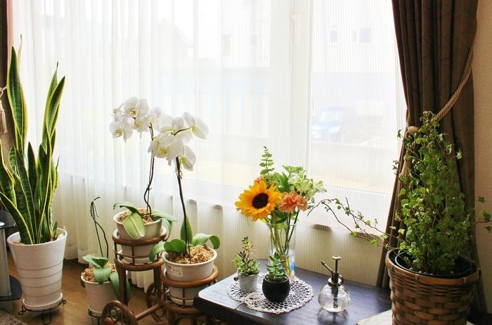 朝のスッキリとした目覚めのために・・・ ルームスプレーを寝室、リビング、キッチン、そして玄関にサッとひと吹き。 清々しい気分になれるはずです。