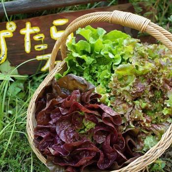 ぴたらファームのコンセプトは、 1. 持続可能な循環の暮らし 2. 自然のリズムに寄り添った健康な野菜をつくる暮らし 3. 自然の巡りに学び、楽しむ、そしてそれを他の人と共有する暮らし 4. 必要なものは自分たちで作り出す暮らし の4つ。