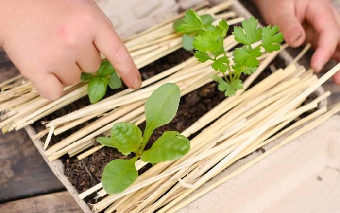 ぴたらファームでは包装の役目を終えたものに、菜園という新たな役割を与えています。 保水性と分解性にすぐれた再生紙から作られている特殊なギフト用の箱は植木鉢代わりになり、プチプチの緩衝材の代わに腐葉土と藁が詰められています。