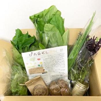 自然のリズムに沿いながら、丁寧に有機無農薬で育てられた旬の野菜が8種類入った、ぴたらファームの野菜の詰め合わせ。
